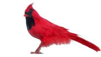 "PC04RD 4"" Feathered Red Cardinal Birds"