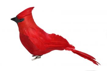 "PC12RD   12"" Feathered Red Cardinal Birds"
